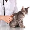 Ветеринарные клиники в Кадоме